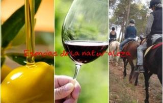 Esencia de la naturaleza: Enoturismo y Oleoturismo en Requena